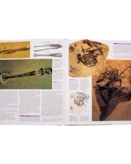 Atlas Ilustrado de los Dinosaurios Voladores Pterosaurios
